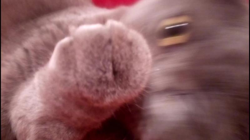 Кошка прётся за СПАРТАК!