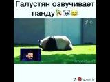 Dream_niftaliev video