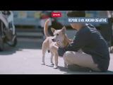 Парень, который дает бродячим собакам то, чего им так не хватает