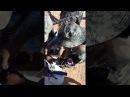 Армия Сирии сбила 7 беспилотников спецназа США