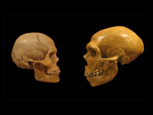 Эволюция человека (рассказывает палеонтолог Александр Марков и др.) 'djk.wbz xtkjdtrf (hfccrfpsdftn gfktjynjkju fktrcfylh vfhrjd