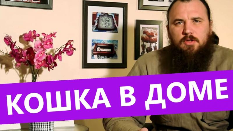 Кошка в доме. Священник Максим Каскун