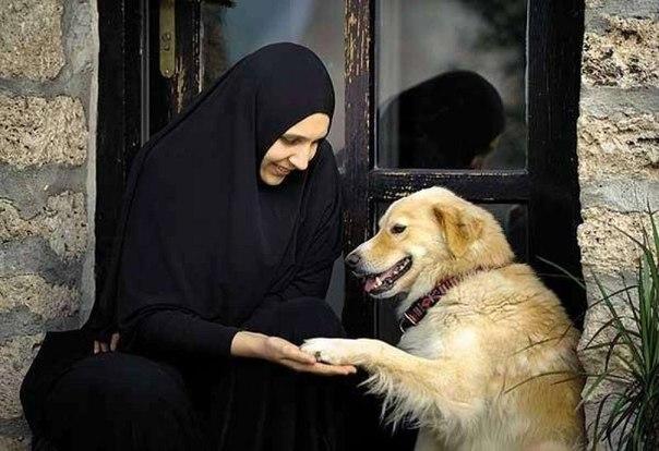 Почему собака в исламе считается нечистым животным