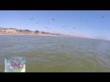 ОГРОМНЫЙ КИТ под лодкой, ОГРОМНАЯ АКУЛА нападает на рыбака