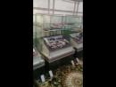 Музей Жамбыл нуска толык емес