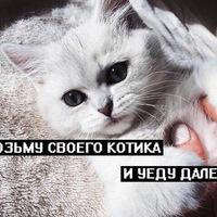 Наталья Шефер