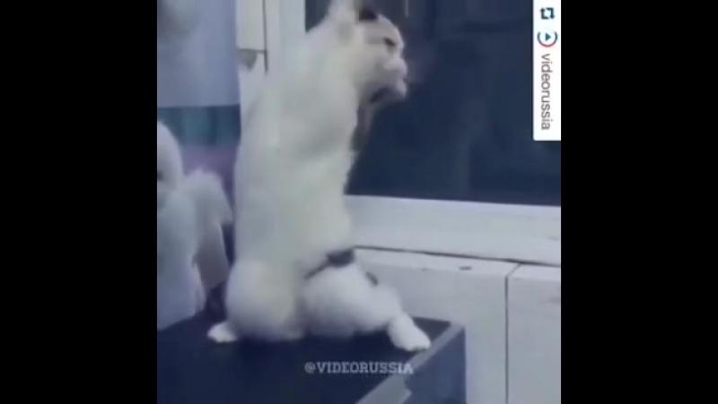 кот женщина я не танцую