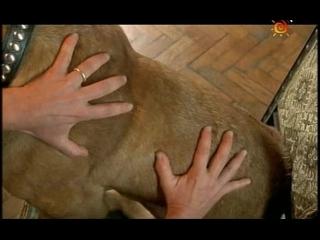 Т/С Домик с собачкой 1 серия (2002г)