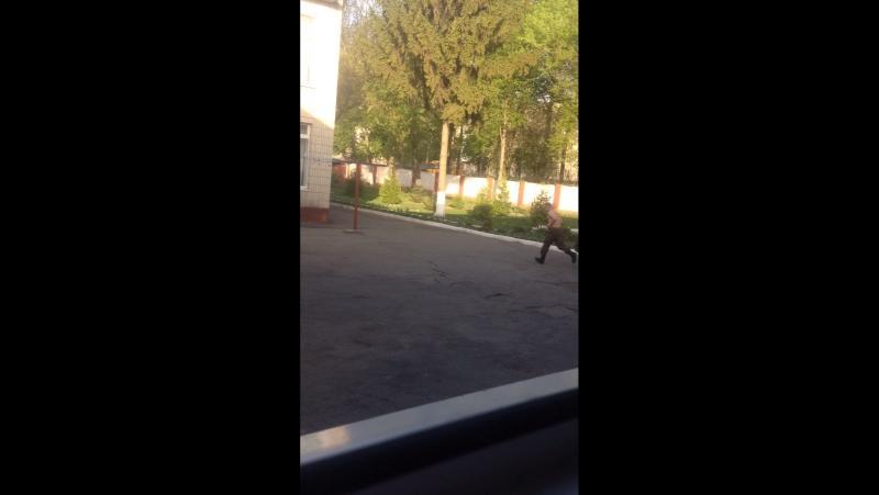 Слони бігають