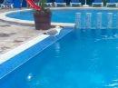 Чайка моет голову и чистит уши в бассейне. Funny Seagull is swimming and cleaning ears in the pool.