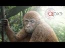 Станислав Дробышевский Родня заря и почти обезьяны