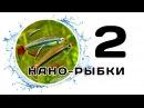 Нано рыбки. Часть 2