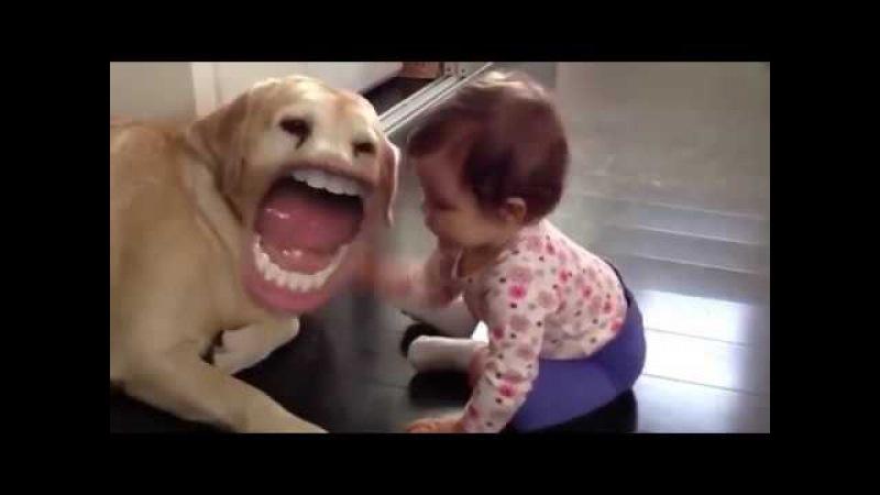 Komik Dublaj Konuşan Köpekler :D