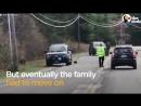 Полицейские помогли семье медведей перейти через дорогу, а в итоге спасли жизнь медвежонку!
