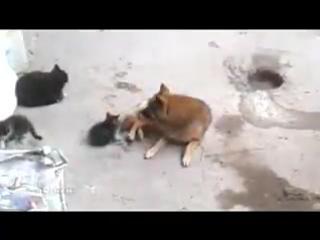Мама-кошка привела своих котят к рыжему другу ...