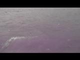 Индия. Ришикеш. Пуджа на реке Ганг.  Начало. 1 часть.