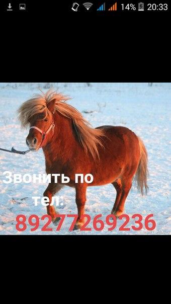 РАЗЫСКИВАЮ ПОНИ!!!  Окрас: рыжий Пол: мужской Убежал 14 января в 14.00