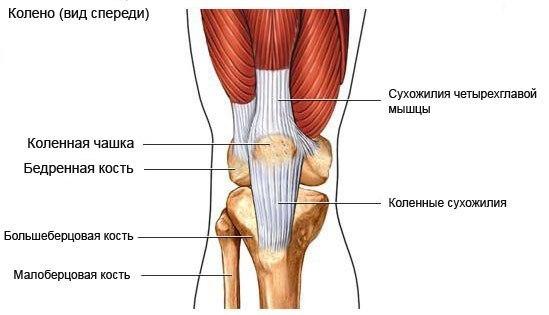 Что делать когда болит колено при приседании