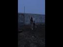 Аккуш булли кутта микс гульдонг