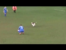 Погоня за собачкой на футбольном поле.