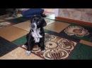 Кошка и собака - БОИ без правил смешное видео