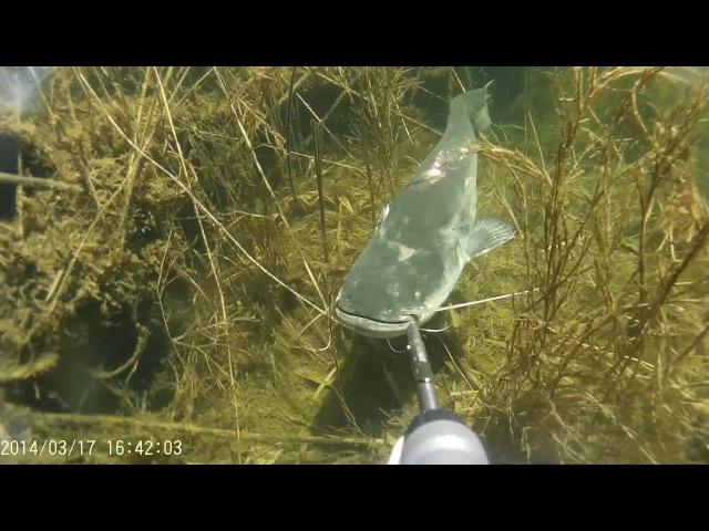 Подводная Охота 2017