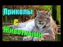 Смешные животные 2017 ТОПовая Подборка. Лучшие Приколы с животными. Funny Animals Compilation