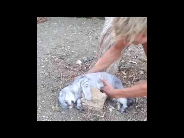 Cat refuses to get up