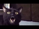 Кошка реально поёт песню