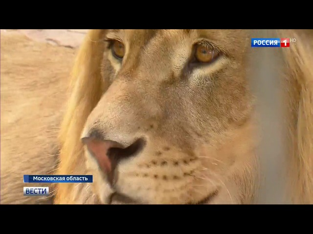Вести-Москва • Сезон 1 • Теневая сторона рынка диких животных: кто и как спасает их от гибели?