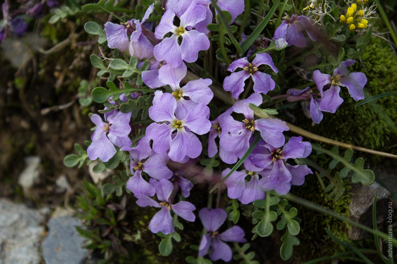 Цветы на Куполе