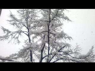 Сняг в София!!Красота!!29 .11 2016г.12 час.