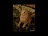 #30 Гифки со звуком  Прикольные видео подборки!
