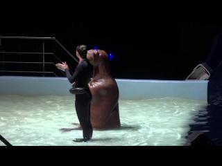 Выступление моржей (начало)