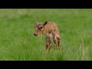 Животные кричат человеческими голосами
