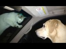 FUN CHALLENGE: Try not to laugh - The FUNNIEST CAT videos EVER