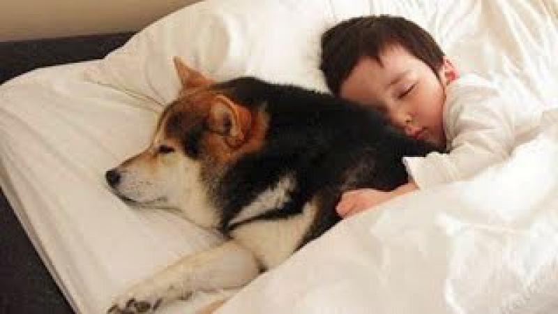 Собаки ЗАЩИЩАЮТ детей - Дети и собаки лучшие друзья, собаки няньки - веселая подб ...