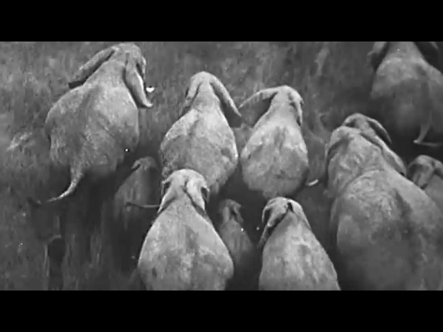 Elad Magdasi - Hell Strike