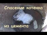Спасение котёнка из цемента