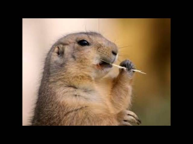 голос сурка, voice Groundhog, la voz de la marmota, 聲音土撥鼠, आवाज Groundhog » Freewka.com - Смотреть онлайн в хорощем качестве