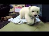 Polar Bear Gets Its Name  Meet Nora!