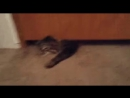 Кот жидкого терминатора