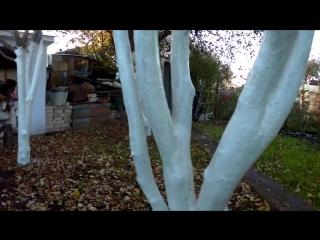 ОСЕННЯЯ ПОБЕЛКА плодовых деревьев .ОЧЕНЬ ЛЕГКИЙ СПОСОБ очистки старой коры...