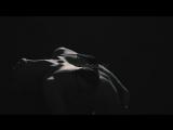 Drake - Hotline Bling (Wildfellaz  Arman Cekin Remix) (VideoHUB)