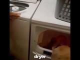 Какая полезная в хозяйстве собачка