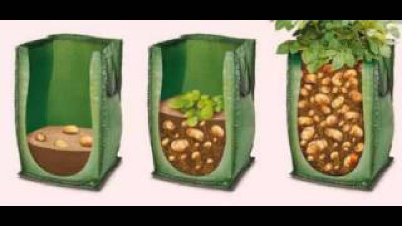 Надоело всё время полоть и окапывать картофель Тогда этот метод посадки для тебя!