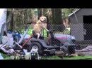 Solemn Tornado Broadcast Interrupted by Dog on Lawnmower