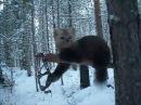 Охота на соболя в Якутии...