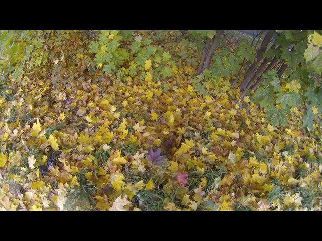 Slimcam C400 съёмка листьев в движении