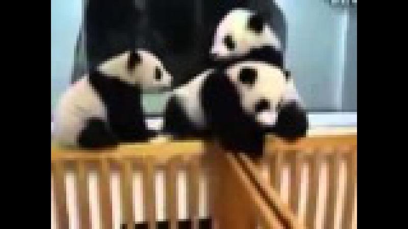 Приколы С Животными! Мишки панды играют! Смешные веселые панды! Смешные Медведи